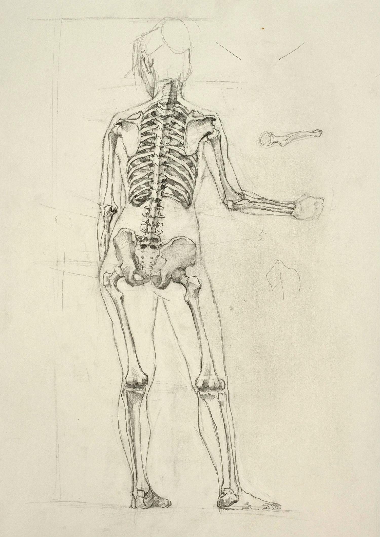 Yim Mau Kun Anatomy Studybackviewskeleton Yim Maukun