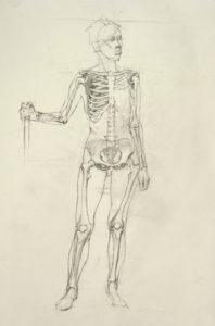 life drawing, figure drawing, anatomy study