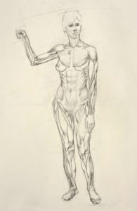life drawing, figure drawing, anatomy study